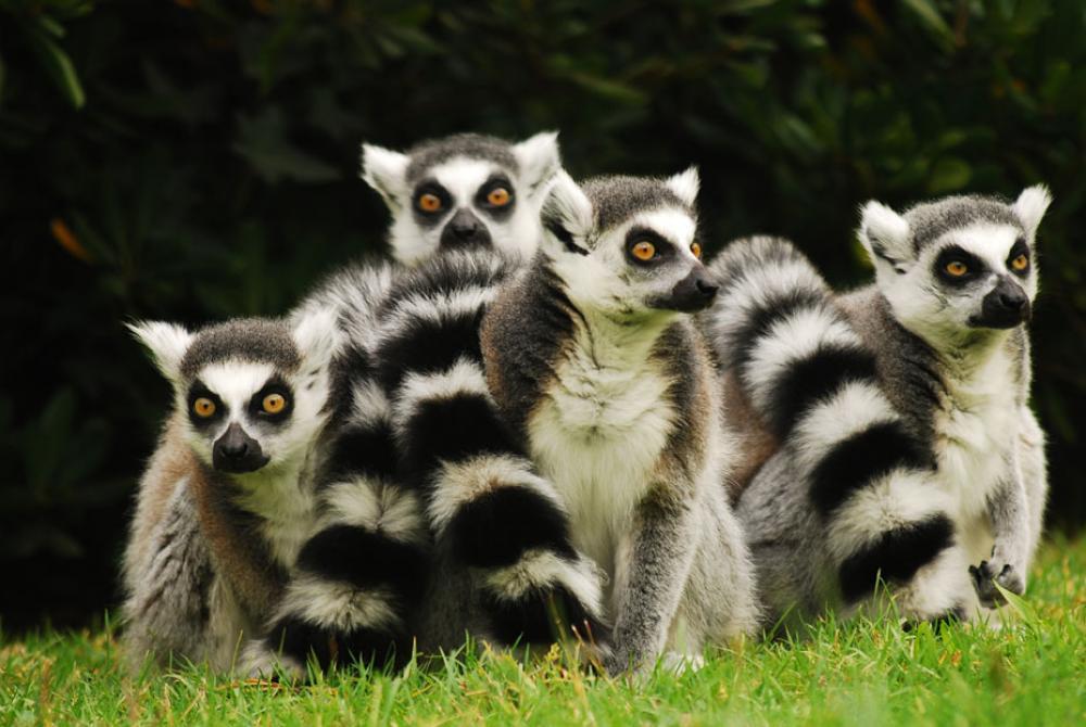 Ufficio Verde Weather : Punta verde zoo park reopening lignano sabbiadoro