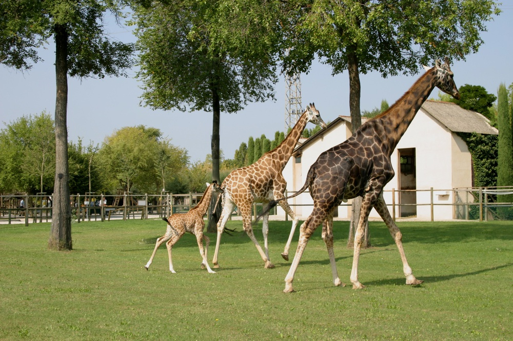 Ufficio Verde Weather : Lignano punta verde zoo park lignano sabbiadoro