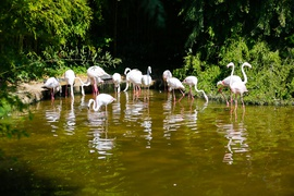 Flamingos at Lignano Zoo Park