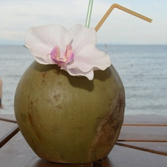 Coconut at Tropical Point in Lignano
